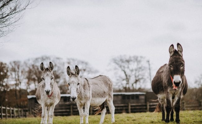 Family of donkeys sharing a paddock