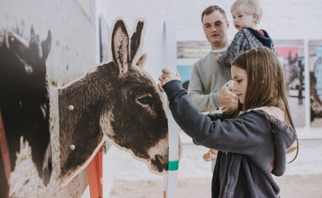 Family enjoys learning about donkeys in The Donkey Sanctuary's Understanding Donkeys Zone