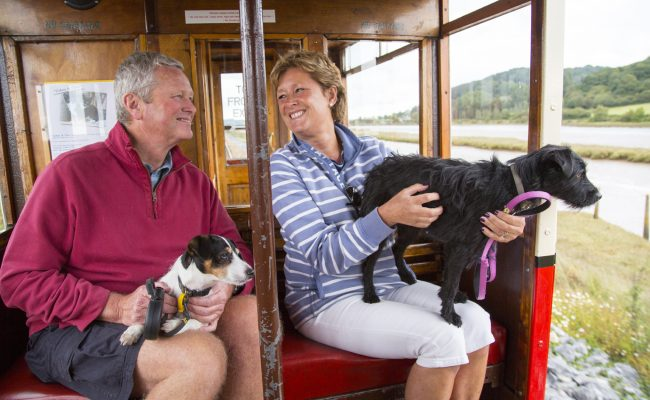 Dogs riding the tram at Seaton Tramway