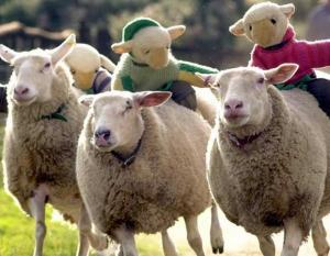 Big Sheep -Devons top attractions