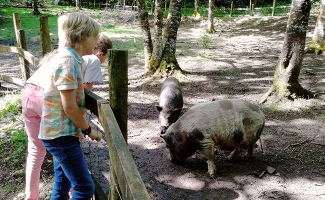 Farm Animals Devon