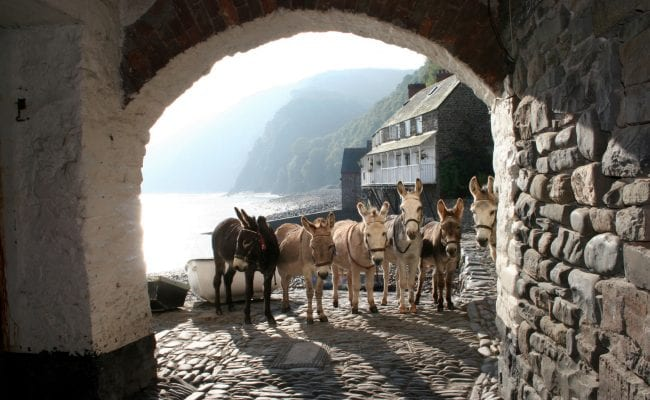 Clovelly's famous donkeys