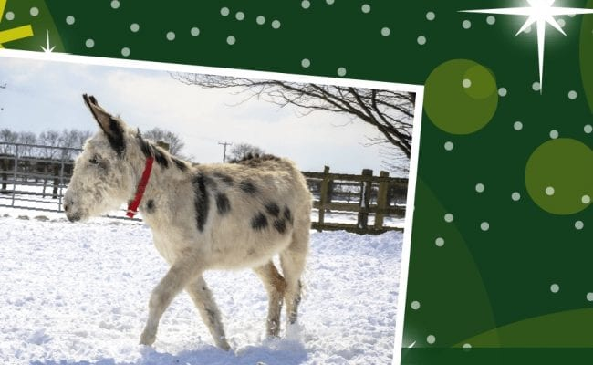 Help Walter and his donkey friends keep warm this winter - prize on completion.