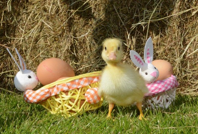 Easter in Devon