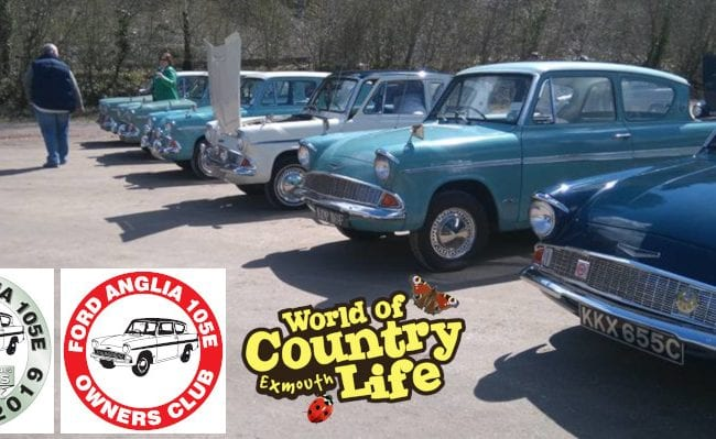 Ford Anglia Owners at World of Country Life Exmouth Devon