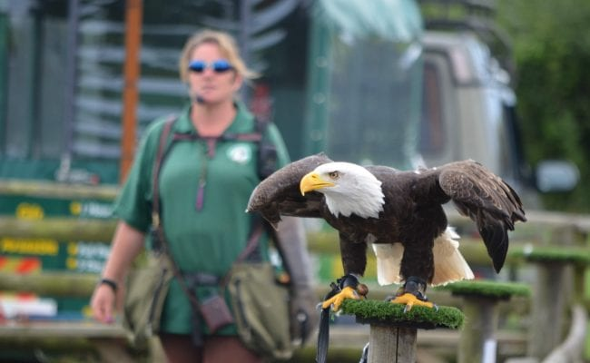 Hawkridge Birds of Prey at World of Country Life Exmouth Devon