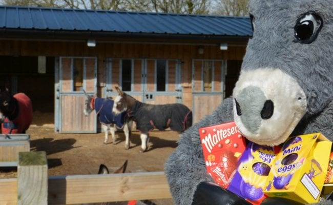 Lucky the Easter donkey takes part in the Easter Holiday Hunt