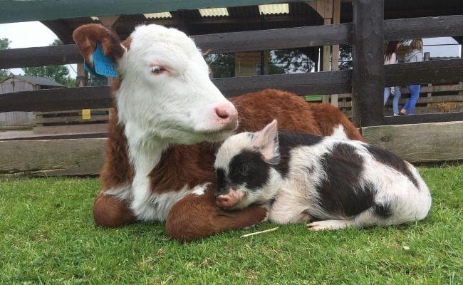 Meet the animals at Pennywell Farm