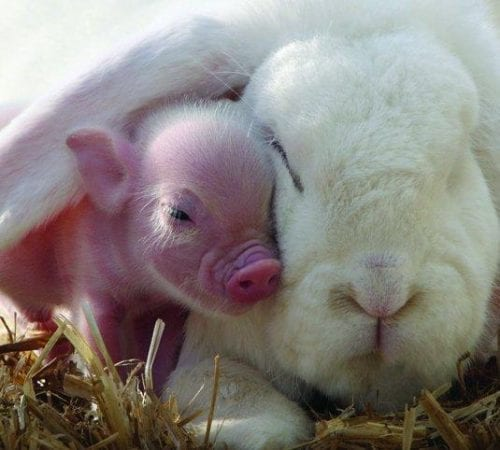 Pennywell Farm - Half Term cuddle time!