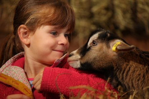 World of Country Life - Devon's Top Attractions
