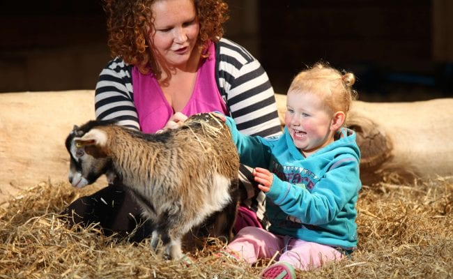 Pet Centre at World of Country Life Exmouth Devon