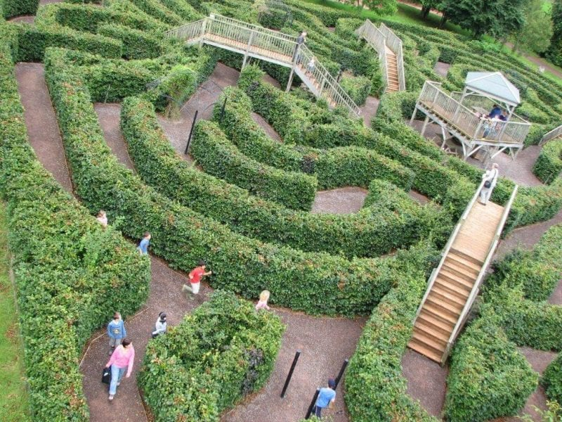 Devon's Top Attractions - things to do in Devon Wildwood Escot Maze