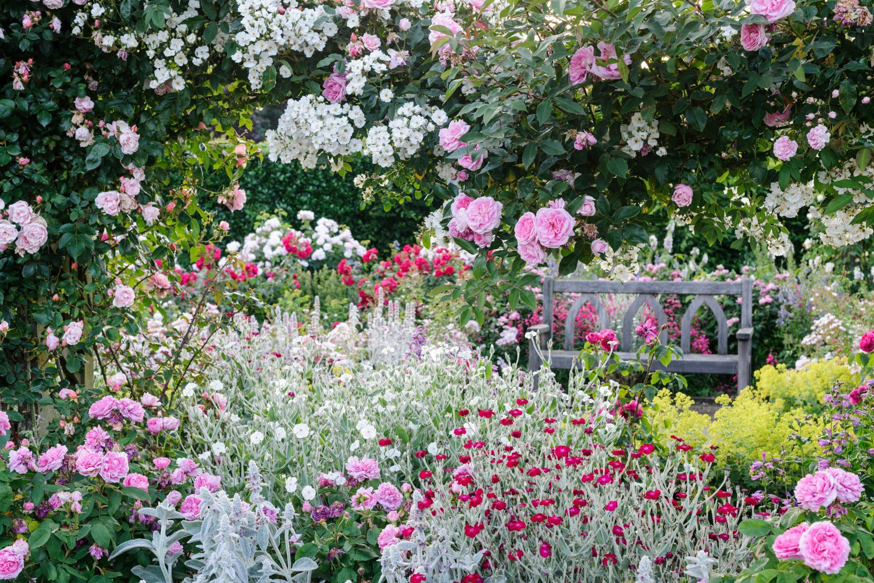 RHS Rosemoor The Shrub Rose Garden i