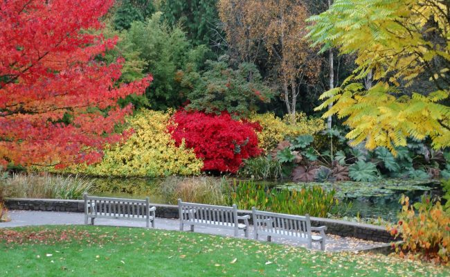 RHS Rosemoor Lake in Autumn