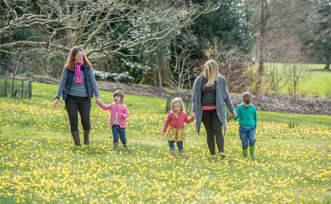 RHS Garden Rosemoor Spring Trail children and parents walking and playing through daffodils