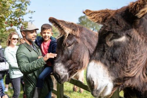 Family enjoy meeting the giant Poitou donkeys