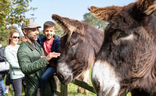 Family enjoy meeting the giant Poitou donkeys