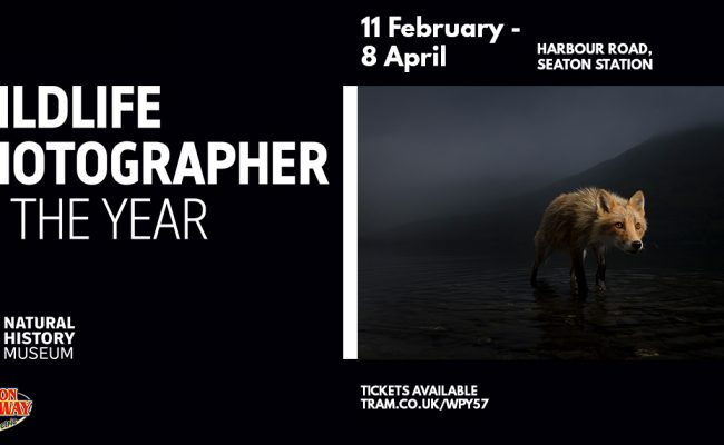 Wildlife Photographer of the Year Exhibition at Seaton Tramway from February 11th