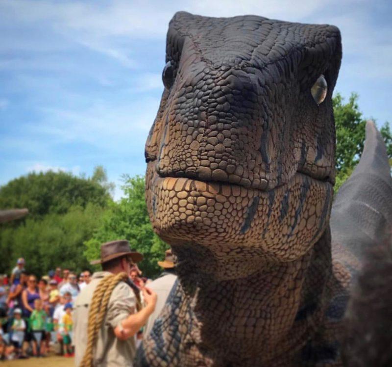 Woodlands family Theme Park -Raptor Day