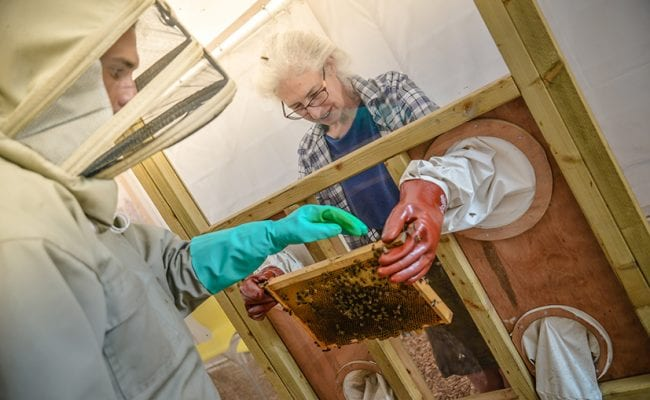 Bee keeping demo at quince honey farm