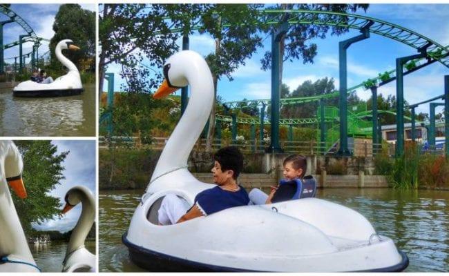 Swan pedlar activity