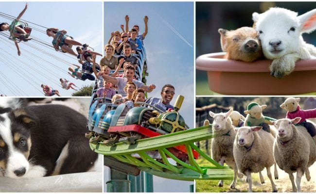 A montage of things to do at the big sheep